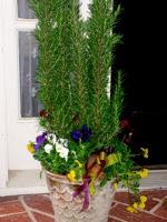 Rosemary Gift Tree