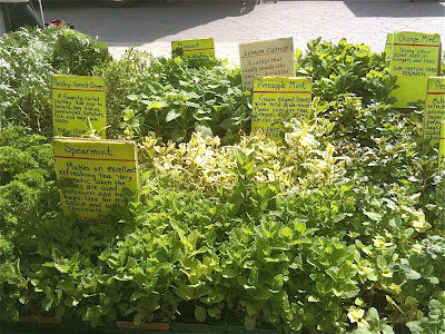 10 Fantastic Uses for Leftover Herbs