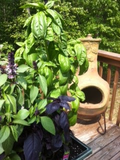 The Black Thumb Plants a Garden: A Guest Post, by Healthy Sous-Chef Partyologist, Lea Bowen