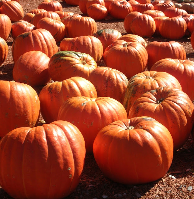 Pumpkins, Sweet Potatoes and Squash – Happy Fall!
